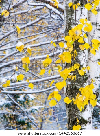We got our first snow of the season during the night, dusting in the fall with sugar in the winter. Melted where the sun touched, snow lingers in the shade, illuminating the winter a bit. #1442368667