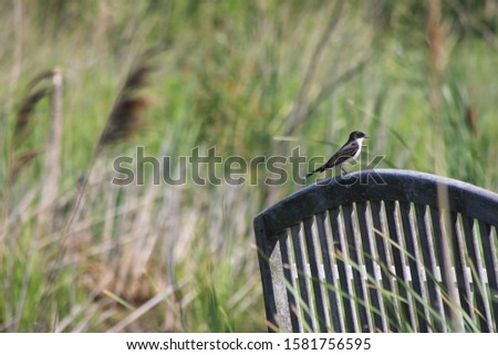 We saw this bird resting on the bench while strolling in the Ottawa National Wildlife Preserve. This was a tranquil place and even the birds find time to perch and rest.