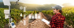 Weather station in a field with vineyard. Woman farmer with tablet at wine farm.