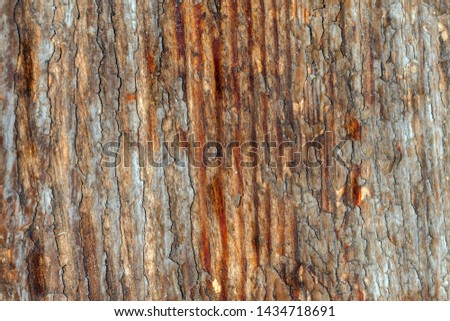 weathered and faded wooden wall or wood paneling with scratches and dust. Scratched raunchy wood flooring with lacquer peeled off