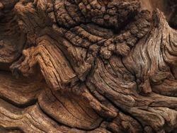 weathered bog wood