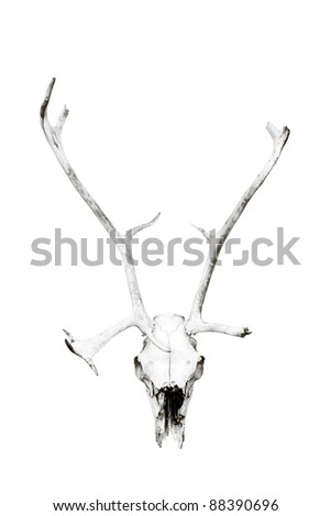 Weathered deer skull, black and white, isolated.