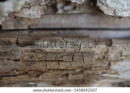 Weathered dry weathered wood Birch #1458692507