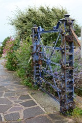 Weathered, locked blue gate covered with peeling blue paint bars entrance to an overgrown path surrounded by plants