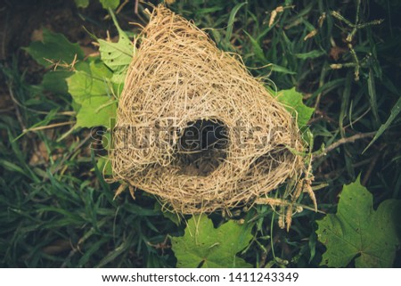 Weaver Bird builds a nest on a large tree.