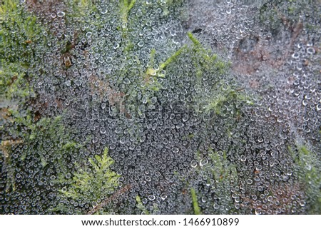 Web and green leaves covered with morning dew. Cobweb with dew drops close up. Background image. Macro photo. #1466910899