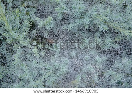 Web and green leaves covered with morning dew. Cobweb with dew drops close up. Background image. Macro photo. #1466910905