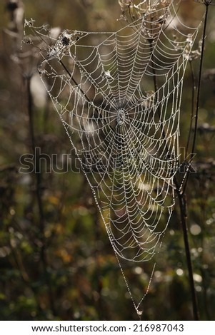 web in the nature #216987043