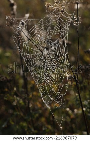 web in the nature #216987079