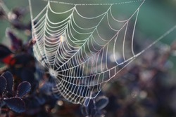 Web Macro Nature
