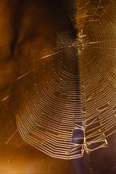 Web that a spider spun to catch prey. Spiderweb