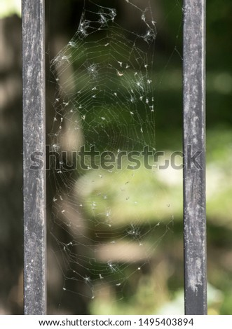 Web. Thin web in the wind. On the web are small flies and seeds. Sunny autumn weather.
