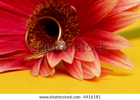 stock photo wedding and engagement ring on a gerbera flower