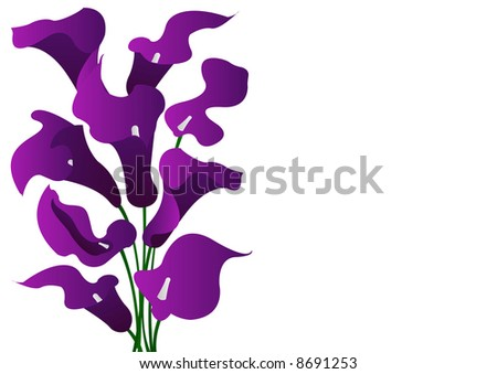 stock photo wedding bouquet purple cala lilies
