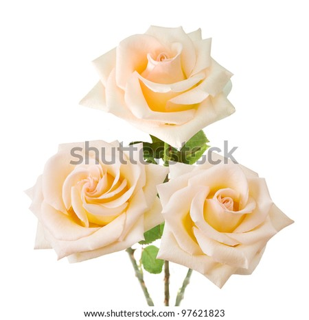 Wedding bunch of cream roses isolated on white