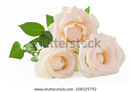 Wedding cream roses bunch isolated on white background