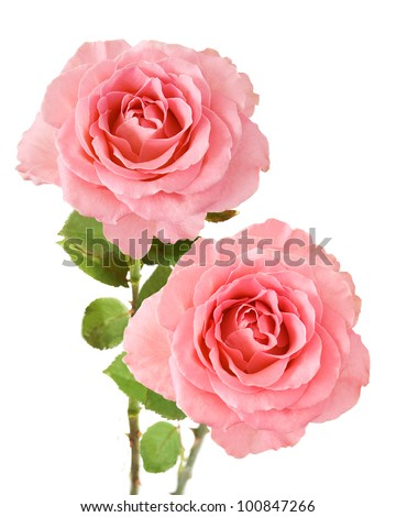 Wedding pink roses bouquet isolated on white background - stock photo