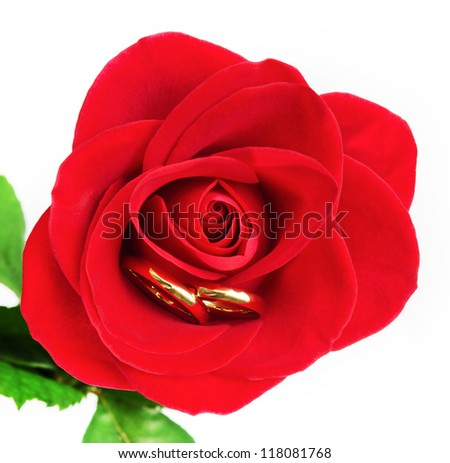 Wedding rings hiding in rose petals/Rose & Wedding rings/Rose & Wedding rings