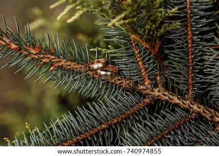 Wedding rings on a spruce branch #740974855