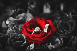 Wedding rings on red roses. Diamond ring inside red rose taken closeup. The perfect Valentine's Day gift