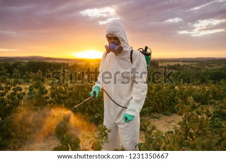 Weed control. Industrial agriculture theme. Man spraying toxic pesticides or insecticides on fruit growing plantation. Beautiful sunset in background. ストックフォト ©