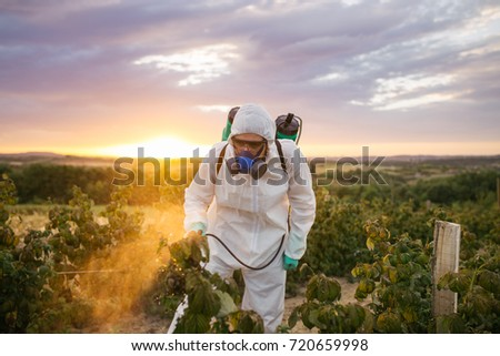 Weed control. Industrial agriculture theme. Man spraying toxic pesticides or insecticides on fruit growing plantation. Natural hard light on sunny day. Blue sky with clouds in background. #720659998