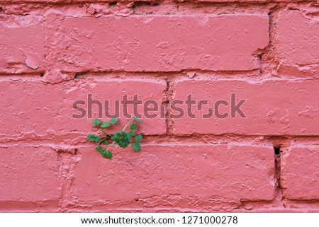 Weed growing from crevice in brick wall, demonstrating the persistence of life where minimal conditions allow.
