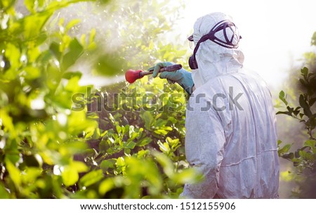 Weed insecticide fumigation. Organic ecological agriculture. Spray pesticides, pesticide on fruit lemon in growing agricultural plantation, spain. Man spraying or fumigating pesti, pest control.  Foto stock ©
