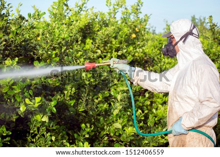 Weed insecticide fumigation. Organic ecological agriculture. Spray pesticides, pesticide on fruit lemon in growing agricultural plantation, spain. Man spraying or fumigating pesti, pest control.