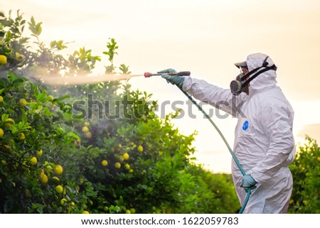 Weed insecticide fumigation. Organic ecological agriculture. Spray pesticides, pesticide on fruit lemon in growing agricultural plantation, spain. Man spraying or fumigating pesti, pest control ストックフォト ©