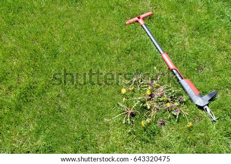 weed removal by hand - lawn maintenance tools and weeds 2 #643320475