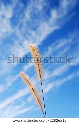weeds blowing in the wind with blur