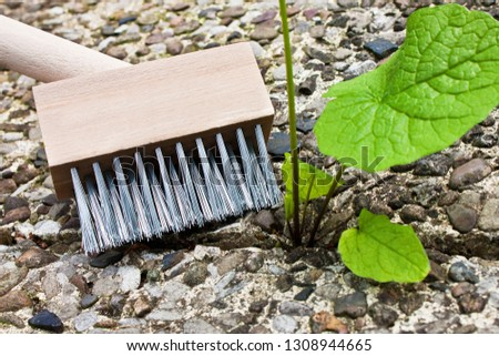 Weeds cleaning with weed brush  #1308944665