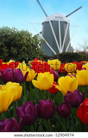 stock-photo-weekend-after-easter-for-the-famous-flowers-windmill-on-the-background-in-garden-nice-spring-52904974.jpg