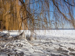 weeping willow at a snow-covered lake