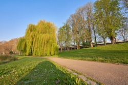 Weeping willow glows in red and green in the early morning, other native trees can be seen in the background, ground-level perspective, in Stuttgart's castle garden