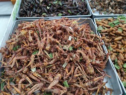 Weird and strange food of Thailand - Insect dishes. Thai - deep fried Grasshoppers  from a pushcart.