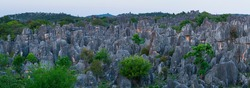 Weird rock formations of limestone in The Stone Forest located in Shilin Yi Autonomous County of Yunnan Province in China, Asia, UNESCO World Heritage Site