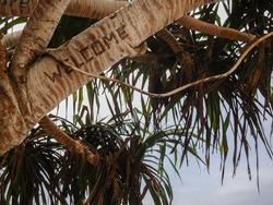 Welcome sign on a palm tree on the beach. Welcome inscription engraved into a palm tree, Mirissa Beach, Sri Lanka.