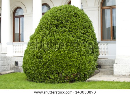 well trimmed bush near the house