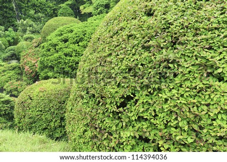 well trimmed bushes in fresh summer garden; focus on front bush leafs