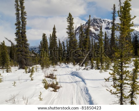Well used winter trail in boreal forest (taiga) of Yukon Territory, Canada.