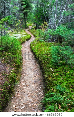 Well worn path through a mixed forest.