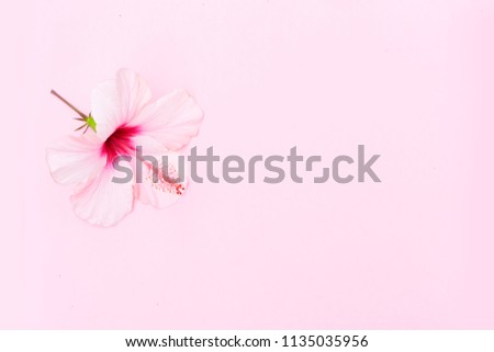 Wellness background with hibiscus flower on pink