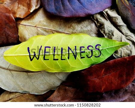 Wellness concept written on leaf