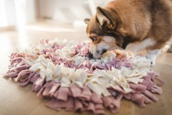 welsh corgi pembroke with a sniffing mat