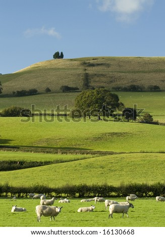 Welsh Hillside