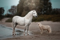 welsh pony on the beach