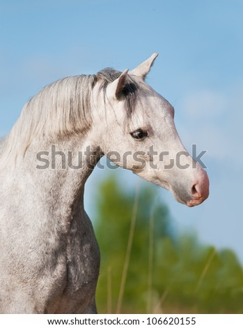 Welsh pony portrait in summer time