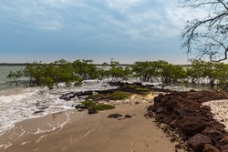 West Africa Guinea Bissau Bijagos islands Bubaque -  mangrove forest on the shores of the ocean